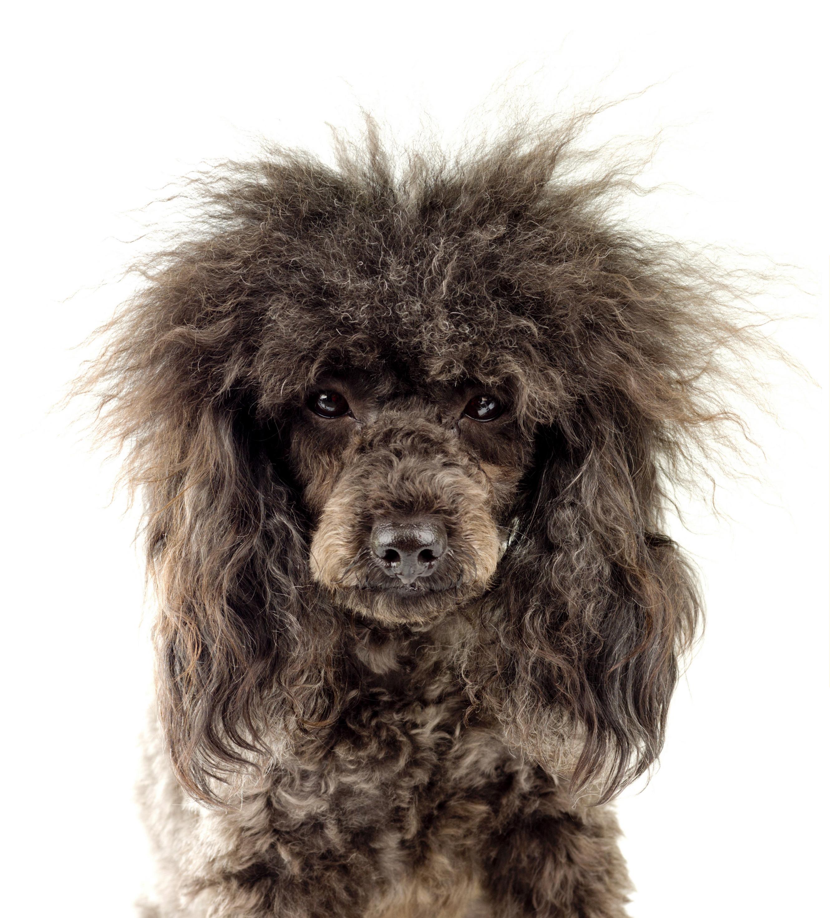 Grooming - Walkers Pet HoTailWalkers Pet HoTail