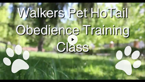 Dog Training Results Video